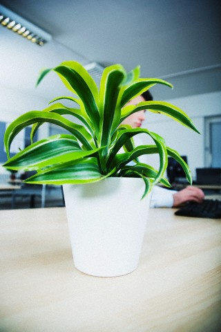 Plants at workplace