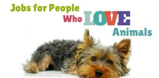 Jobs for People Love Animals