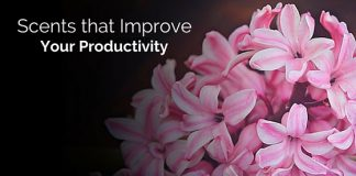 scents that improve productivity